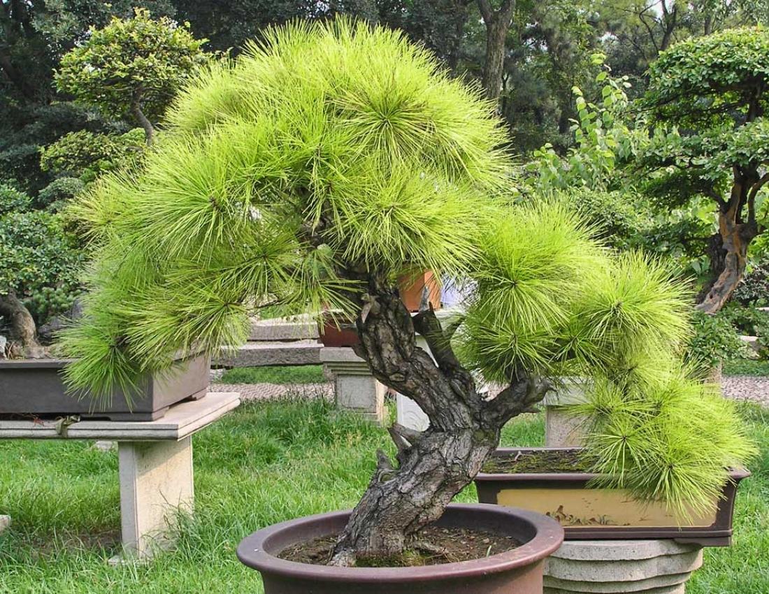 Как сделать растущее дерево