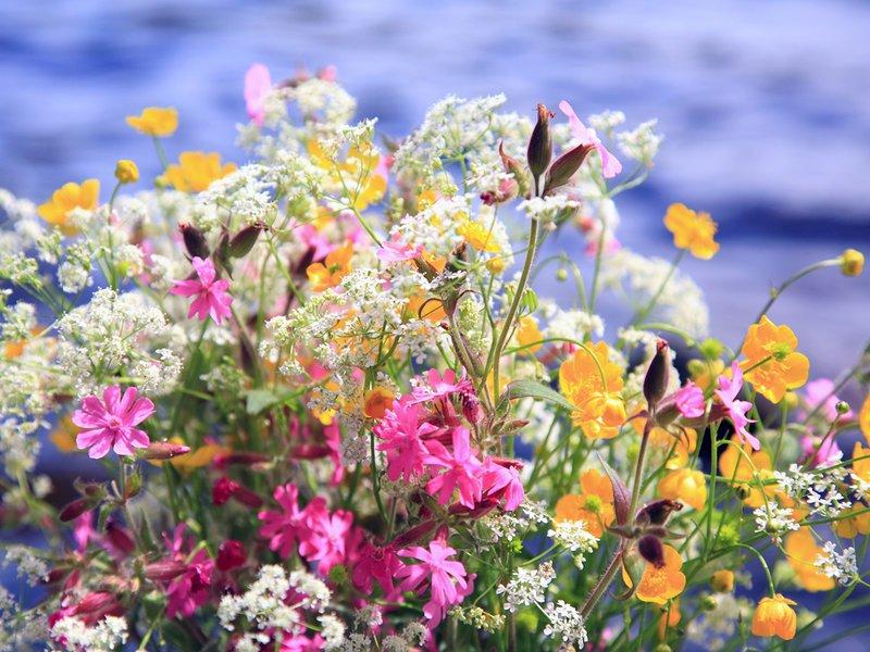 Картинки по запросу фото літніх букетів квітів