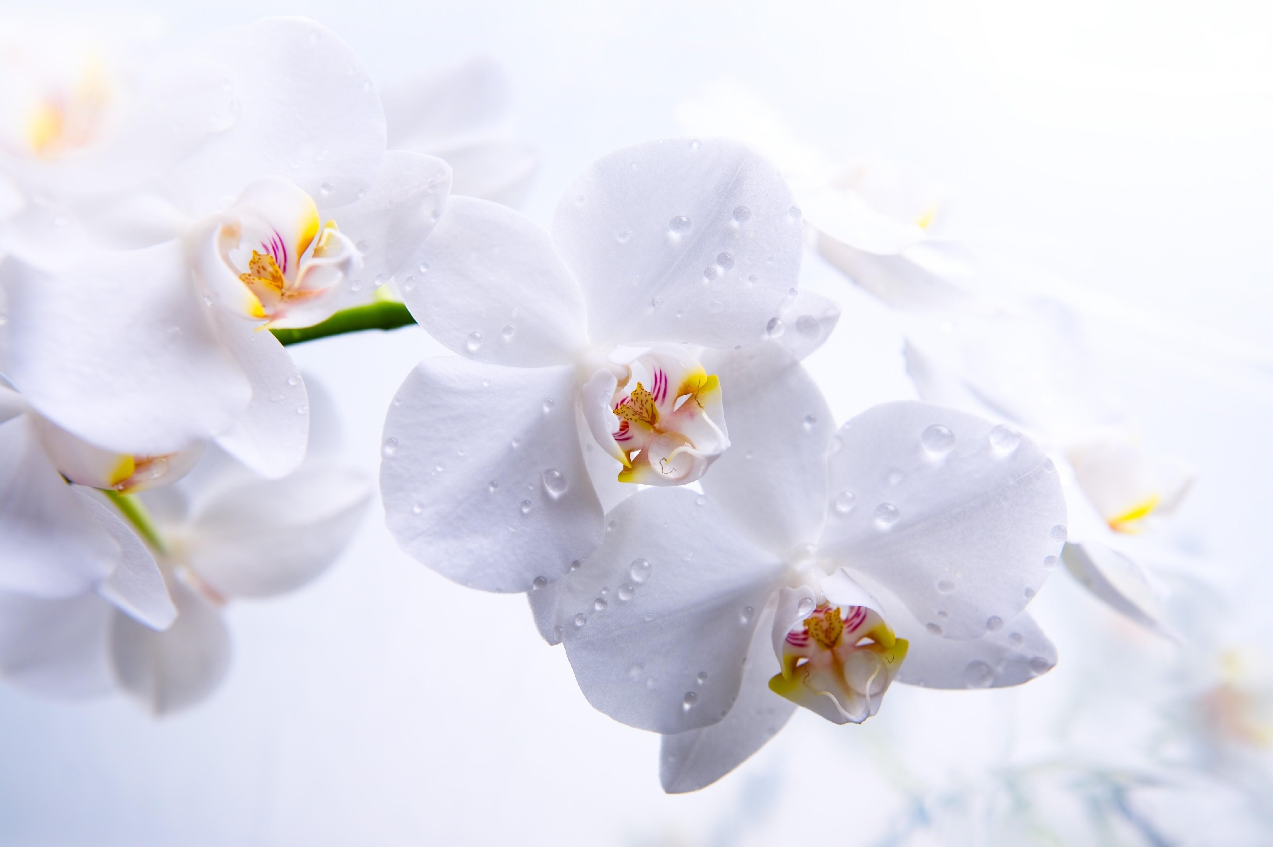 Белые цветы фото