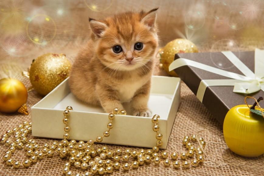 Коты на новый год картинки