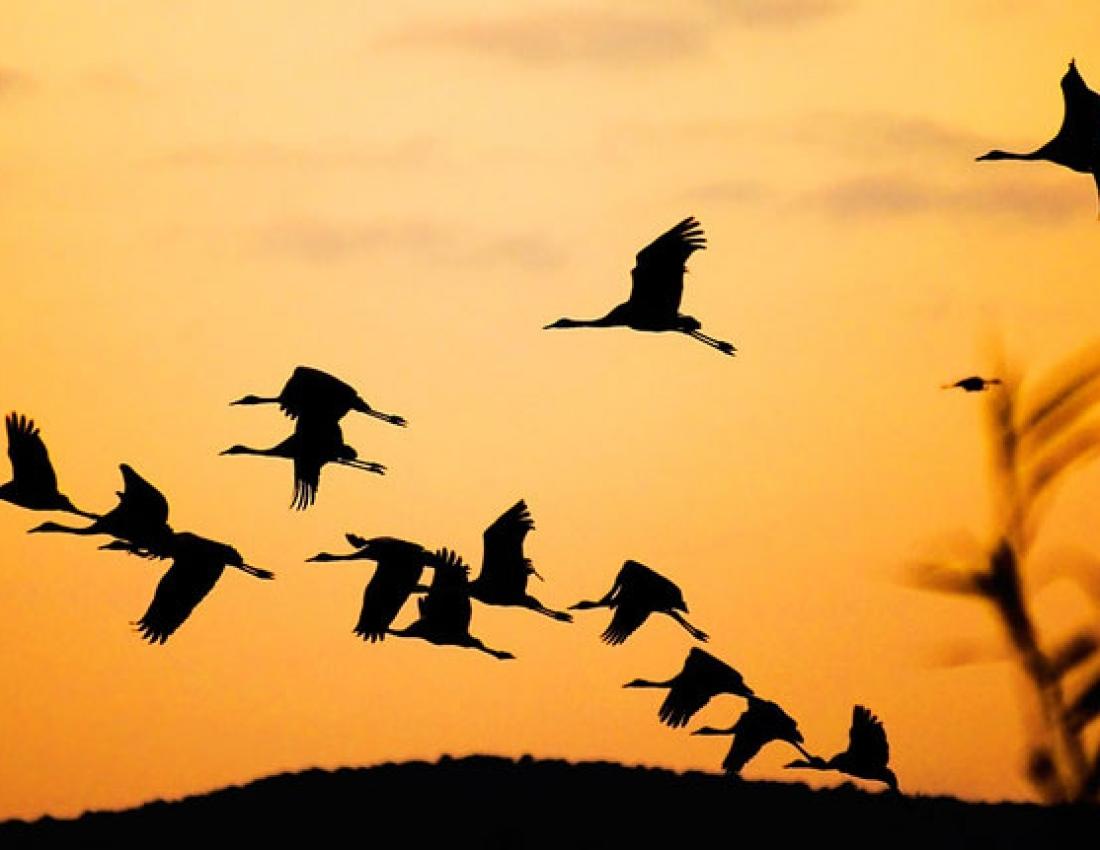 Картинки для счета птицы семья